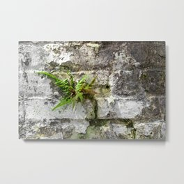 New Orleans - Brick Wall and Fern Metal Print