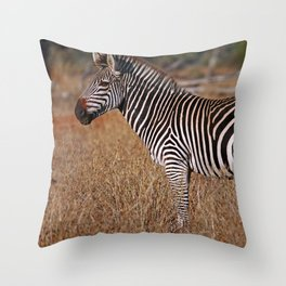 Zebra in the sunlight, Africa wildlife Throw Pillow