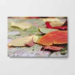 Fallen red and yellow leaves Metal Print