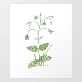 Bluebell Watercolor Art Print