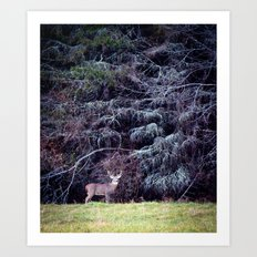9 Point Buck Art Print