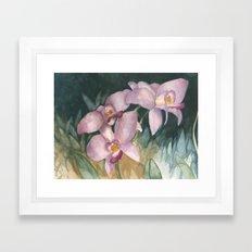 Orchid Elegance Framed Art Print