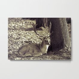 Fallow deer #society6 Metal Print