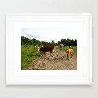cows Framed Art Prints featuring Cows by Emily Elizabeth Reichmann