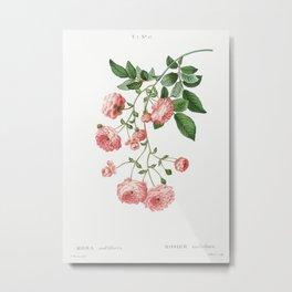 Rambler Rose (Rosa multiflora) from Traité des Arbres et Arbustes que l'on cultive en France en plei Metal Print