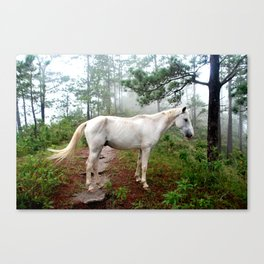 Magical Horse Canvas Print