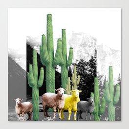 pecore Canvas Print