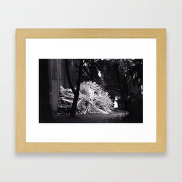 A thig growing in the back of the building Framed Art Print