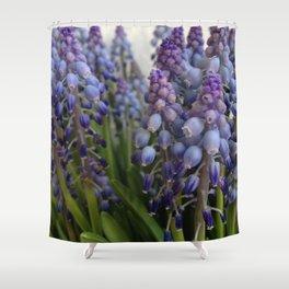 Grape hyacinths Shower Curtain