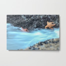 Samoa Starfish Metal Print