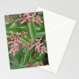 TEXTURES - Manzanita in Drought #1 Stationery Cards