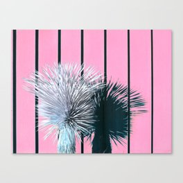 Yucca Plant in Front of Striped Pink Wall Canvas Print