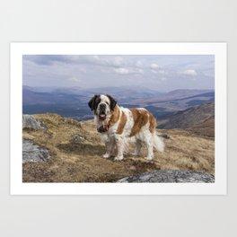 St Bernard dog on the mountain Art Print