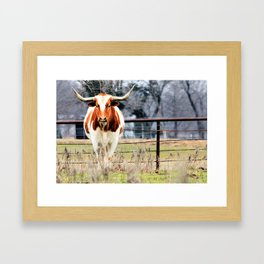 Texas Longhorn Morning Framed Art Print