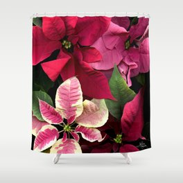 Colorful Christmas Poinsettias, Scanography Shower Curtain