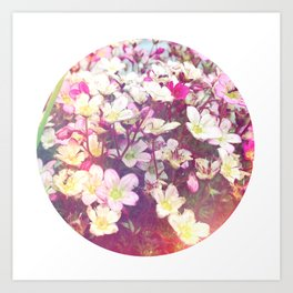Flowers At The Chalet Art Print