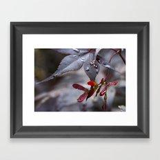 Japanese Maple Seeds II Framed Art Print
