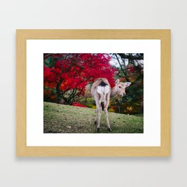 Deer in Nara Park Framed Art Print