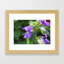 Purple Snap Dragon Flowers Framed Art Print