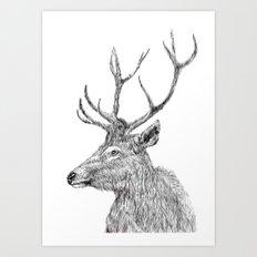 stag n.1 Art Print