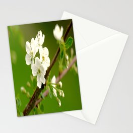 Cherry Tree Branch With White Flowers #decor #society6 Stationery Cards
