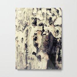 yellow bark in winter Metal Print