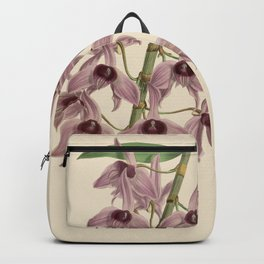 R. Warner & B.S. Williams - The Orchid Album - vol 01 - plate 042 Backpack