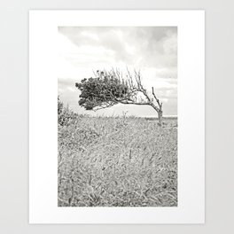 Rooted in the Past, reaching for the Future Art Print