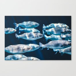 Blue fish swim in the water Canvas Print