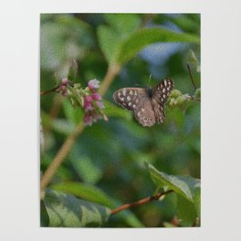 Speckled Wood Butterfly Poster
