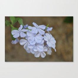 Blue Flowers Fine Art Photography Canvas Print