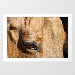 The Eye is a Window - Dun Mare Art Print