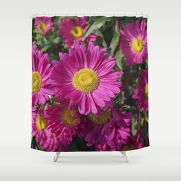 Summer Asters 4636 Shower Curtain