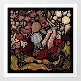 Intertidal Life of the North Atlantic (without species list) Art Print