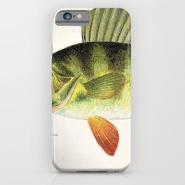 Vintage Game Fish Yellow or Barred Perch Identification Chart Chromolighograph iPhone Case
