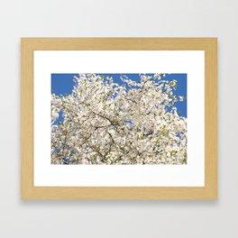 white flowers of Cerasus Framed Art Print