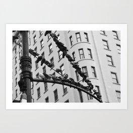 Birds on a Wire (Columbus Circle) Art Print