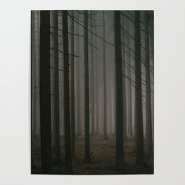 Dark morning forest Poster