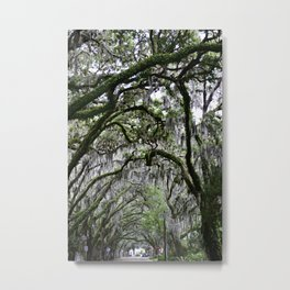 """Youthful Contours"" Tree Tunnel Photo - St. Augustine Fl. Metal Print"