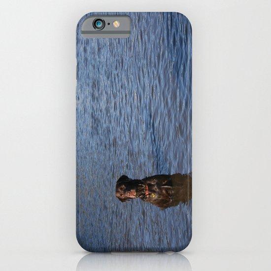 Wet Dog iPhone & iPod Case