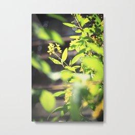 Alamo Flowers Metal Print