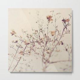 Magnolia tree. Winter Metal Print