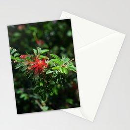 Red Desert Flower Stationery Cards