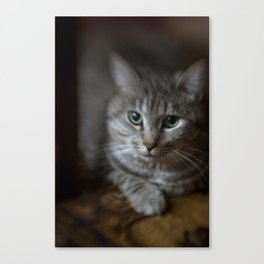 phil cat Canvas Print