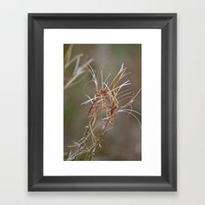 Flower Seed Heads Framed Art Print