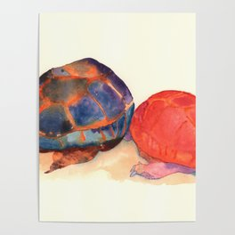A couple of turtles Poster