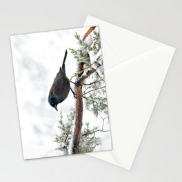 Snow Grackle Stationery Cards