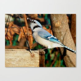 """""""Yes, I can eat suet!"""" Canvas Print"""