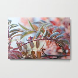 Branches of A Mountain Ash Metal Print