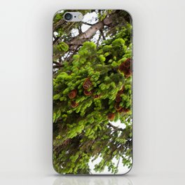 Large spruce fresh shoots iPhone Skin
